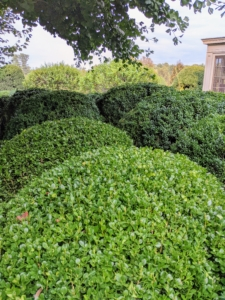 I love the grouped effect of the boxwood, especially when they are so lush and green.