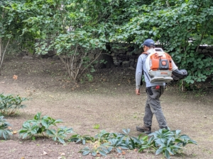 Chhiring uses a STIHL backpack leaf blower and goes over the area once again to make sure it is completely clean. We've been using STIHL's backpack blowers for years here at my farm. These blowers are powerful and fuel-efficient. The gasoline-powered engines provide enough rugged power to tackle debris while delivering much lower emissions.