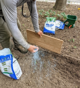 He carefully starts dropping the grass seed on one side of the board - there is absolutely no grass touching the area behind the wood.