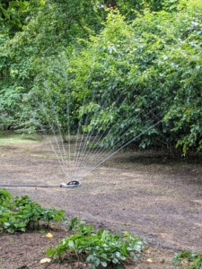 When watering new grass seed, it must watered deeply every day to get the best results.