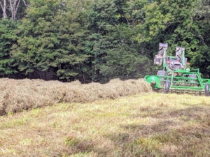 Chhiring goes over the entire hayfield to make as many wide, fluffy windrows as possible.
