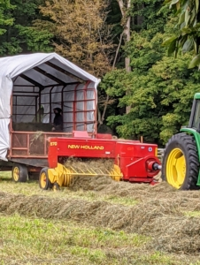 Chhiring drives the tractor and starts the process midday when there is the least amount of moisture. The tractor rides to one side of the windrow while the baler passes directly over it to collect the hay.