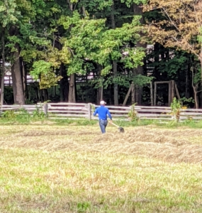 Domi walks behind the baler to rake up any hay that was not picked up by the machine.