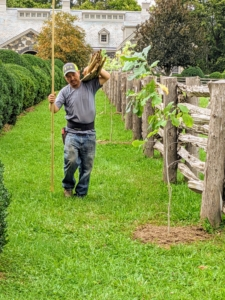 Here is Chhiring with the bamboo stakes. I feel it is important to stake every tree, so it is well supported and well-marked as it develops.