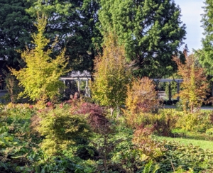 This garden and the adjacent Stewartia garden are constantly evolving and coming along so beautifully – I am looking forward to watching it flourish for many years. I hope this blog inspires you to do some planting in your garden – there is still time left in the season.
