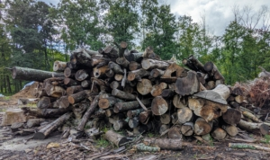 These smaller logs and wood scraps are neatly piled in another area and saved for the giant tub grinder, which I I like to call in once a year or once every two years depending on how much there is to recycle.
