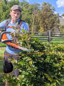 Ryan starts trimming the tops of the trees - the smaller branches are trimmed with our STIHL battery-powered hedge trimmers to lop off the tops more precisely. This trimmer is lightweight, starts instantly and delivers quiet, powerful performance.