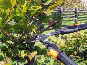 The lopper can cut branches that are one to one-3/4 inches thick.