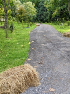 During strong rain storms, the water runoff sometimes washes the gravel off of this road by the azaleas and onto the grassy areas. We often place bales to help direct the rain water to the appropriate drains.