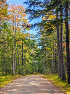 It's always nice to see the photos taken by others at my homes. Cheryl took this photo leading to the main driveway at Skylands. The changing leaves look so beautiful mixed with the evergreens.