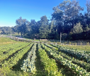 The farm grows at least 200-varieties of produce year-round, both indoors and in the outdoor fields and gardens.