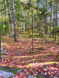 """And here's another view of the woodland looking from the road to the playhouse. This is peak """"leaf peeping"""" here in the Northeast. Soon all the deciduous trees will be bare. If you're in the area this weekend, I hope you're able to enjoy some nature's gorgeous autumn colors."""