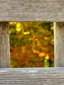Wendy took this image of the maple leaves through one of the square holes in the fence.