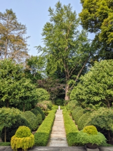 This is the sunken garden behind my Summer House. This parterre garden is very formal and focuses on the giant 250-year old ginkgo tree in the rear. Growing beneath the ginkgo is a beautiful chocolate mimosa tree, a fast-growing, deciduous tree with a wide, umbrella-shaped canopy.