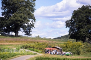 At another stop, guests gather at umbrella covered tables to learn more about the farm. The Harvest Feast lasted about three hours in all. (Photo by Mike Falco for Stone Barns Center for Food & Agriculture)