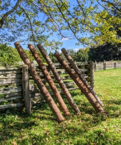 Here are the new upright fence posts - all the same size and height.