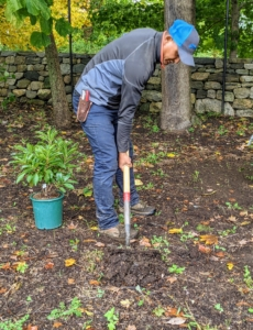 Domi starts by digging the hole at least twice the size of the plant. Azaleas thrive in moist, well-drained soils high in organic matter.