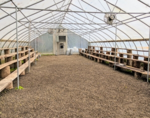 Here is one of two large hoop houses at my farm, and one of five total greenhouses. I store all my citrus plants here. The weather in the Northeast is starting to get chilly, especially at night – temperatures are now in the 50s, so it is important to get started on this process. In general, there is more room at my Bedford, New York farm to store my warm-weather specimens, so many from Maine are also returned here after the summer. This greenhouse works by heating and circulating air to create an artificial tropical environment. The entire structure is built using heavy gauge American made, triple-galvanized steel tubing covered with heavy-duty, woven polyethylene.