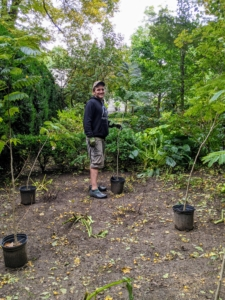 Ryan brought in collection of green mimosa trees to add to this space. Mimosa trees are fast-growing, cold weather tolerant, and pollinators absolutely love them.