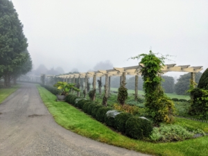 The long pergola can be seen up close, but everything else is covered in fog.
