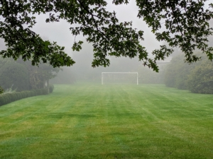 Here is the soccer field where my grandson, Truman, loves to play when he is here. The large regulation soccer net can hardly be seen in the distance. To the right are some of the quince trees, now laden with fruits.