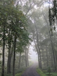 """The carriage road to the woodland looks eerie surrounded by fog. Fog reduces visibility below one-kilometer, or six-tenths of a mile, making it very difficult to navigate. Some describe fog to be """"as thick as pea soup"""". This was originally used to describe the dingy yellow smog from burning soft coal common in Europe. Such fogs occurred in London until the Clean Air Act of 1956."""