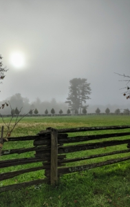 Here is a view from another side of the white pines. Fog is most likely to occur at night or near dawn when the temperature of the day is normally at its lowest.