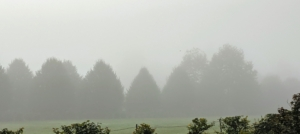 Look at the fog across the paddock – it's so dense. However, the foggiest place in the world is the Grand Banks off the island of Newfoundland, Canada. It gets more than 200-days of fog per year.