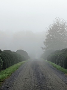 This view is from the stable looking down the long Boxwood Allee. Dense fog is when visibility is at least one-quarter mile or lower. And, when fog mixes with air pollution, it's called smog.