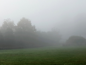 """Unlike clouds, fog only forms at low altitudes. This is another view through the """"house paddock."""" On the left is one of two linden tree allees. The taller trees are sycamores."""