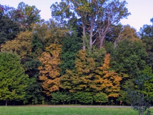 Here, the changing leaves haven't quite peaked yet, but the fall foliage is already looking so pretty around the farm. Some trees change early, others late – usually from October to November in the Northeast.