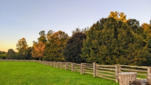 The perimeter around my paddocks displays such wonderful shades of orange, yellow, amber, brown, and green. I love the layers of color created by the changing leaves. Although some autumn coloration occurs wherever deciduous trees are found, the most brightly colored foliage is seen in Canada, the northern United States, Scandinavia, northern and western Europe, the Caucasus region near the Black Sea, Russia, eastern Asia, Argentina, Chile, southern Brazil, Korea, Japan, and New Zealand's South Island. Here is my grove of American beech trees.
