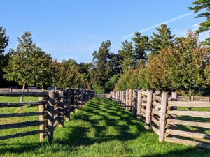 I extended the allee in 2017. I loved the linden tree allee so much, I decided to extend it all the way down to the chicken coops – I am so pleased with how well it is growing. In time, this section will be as full as the original half.