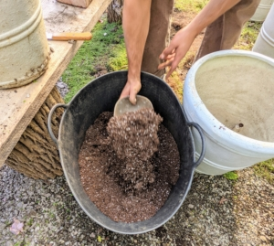 Citrus plants need well drained soil, so it is important to have the right potting mix that includes peat moss, perlite, vermiculite and nutrient-rich compost.