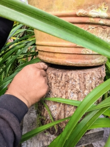 And then places three underneath the pot to make it secure on top of the stump.