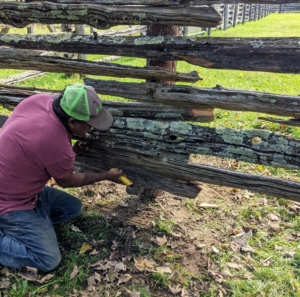 Pete returns the antique horizontal supports and attaches them to the new posts on the inside of the fence.